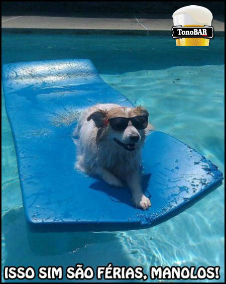 vero piscina manolo ferias escritrio curtindo calor cachorro  win  Veja como curtir suas ferias de forma top!